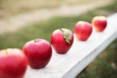 Fem röda äpplen Royaltyfria Bilder