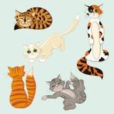 Fem roliga mångfärgade katter Arkivfoto