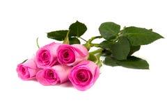 Fem rosa ro Arkivfoton
