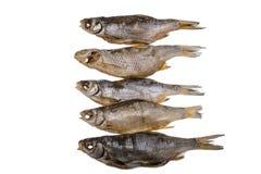Fem torkade rimmade mörtfishs på en isolerad vit bakgrund Royaltyfria Bilder