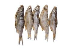 Fem torkade rimmade mörtfishs på en isolerad vit bakgrund Royaltyfri Bild