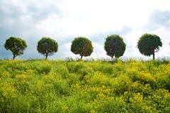 fem trees Royaltyfria Foton