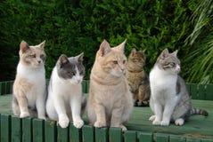 Fem väntande färgrika katter Royaltyfri Bild