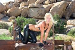 Femail Baumuster in der Wüste Lizenzfreies Stockfoto