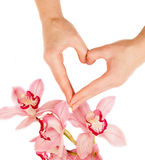 Femail fingers and orchid flowers Royalty Free Stock Images