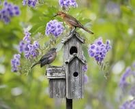 Fåglar på ett fågelhus Arkivbild