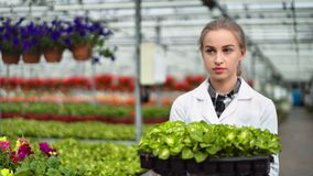 Female agricultural engineer walking with box full of seedling in greenhouse medium close-up. Young woman biologist going surrounded by row of fresh organic stock video footage