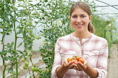Female Agricultural Worker Checking Tomato Plants In Greenhouse Royalty Free Stock Photography