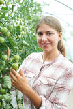 Female Agricultural Worker Checking Tomato Plants In Greenhouse Stock Photo
