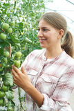 Female Agricultural Worker Checking Tomato Plants In Greenhouse Royalty Free Stock Photos