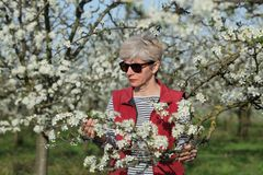 Farmer or agronomist in blossoming plum orchard. Female agronomist or farmer examining blooming plum trees in orchard Stock Images