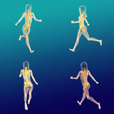 Female Anatomy 7. Realistic female human body anatomy with running pose Royalty Free Stock Photo