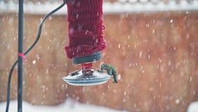 Female anna's hummingbird feeding from red backyard feeder during snowfall