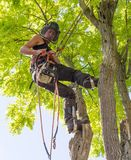 Getting ready to use a chainsaw. Female Arborist getting ready to use a chainsaw stock images