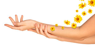 Female arms with yellow flowers Stock Photography