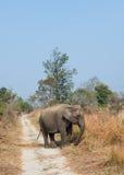 Female Asian Elephant Stock Image