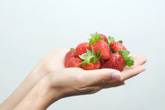 A female asian hands holding strawberries Royalty Free Stock Image