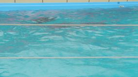 Female And Baby Dolphin In The Pool stock video footage