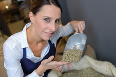 Female baker holding grain wheat. Female baker holding grain of wheat royalty free stock image