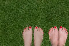 Female beautiful feet with red nails standing on green grass. Royalty Free Stock Photography