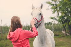 Female and beautiful horse. stock images