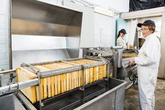Female Beekeeper Operating Honey Extraction Plant Royalty Free Stock Photo