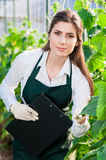 Female bio technician inspecting cucumber leaves Royalty Free Stock Images