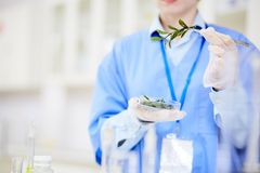 Female Biologist with Petri Dish. Unrecognizable biologist holding Petri dish with seedling in hand while carrying out experiment at modern laboratory, blurred Royalty Free Stock Photography