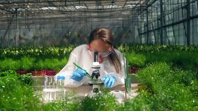 Female biologist works with plants in greenhouse.