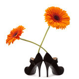 Female black shoes with orange flower Stock Images