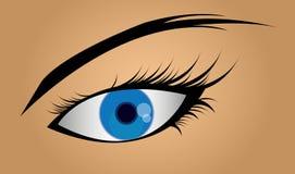 Female blue eye. Vector illustration Royalty Free Stock Photography