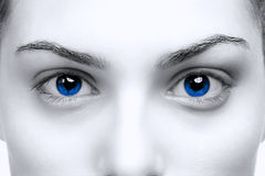 Female blue eyes Stock Image