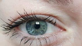 Female blue eyes. A macro detail of Iride royalty free stock photo