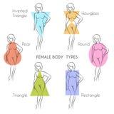 Female Body Types. Anatomy. Main woman figure shape, free font used Stock Photos