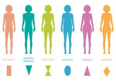 Female body types. Anatomy,woman front figure shape, vector silhouette Stock Photography