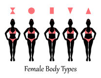 Female body types Royalty Free Stock Photography