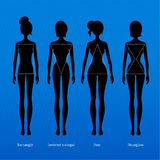 Female body types. Vector illustration of female body types Stock Photos