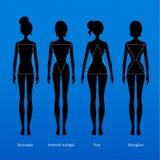 Female body types. Vector illustration of female body types Stock Photos