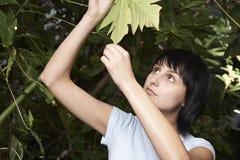 Female Botanist Examining Leaf. Young female botanist examining leaf in greenhouse Stock Image