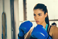 Female Boxer Stock Images