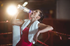 Female boxer drinking water in boxing ring Stock Image