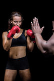 Female boxer with fighting stance against trainer hand. Over black background royalty free stock photo