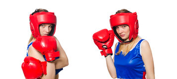 The female boxer isolated on the white background Stock Image