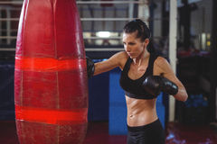 Female boxer practicing boxing with punching bag Royalty Free Stock Photos