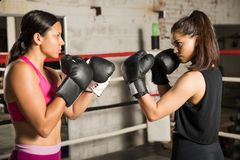 Female boxers ready to fight. Profile view of a pair of female boxers holding a fighting stance and getting ready to fight in a boxing ring Stock Photo