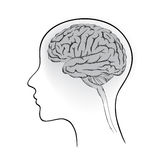 Female brain. Think icon concept. Stock Photo