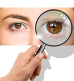 Female brown eye Royalty Free Stock Photography