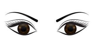 Female brown eyes on a white background. Vector illustration Royalty Free Stock Images