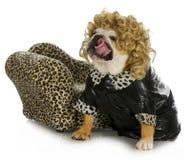 Female bulldog Royalty Free Stock Photo