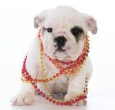 Female bulldog puppy Royalty Free Stock Photos